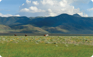 ranches for sale new mexico